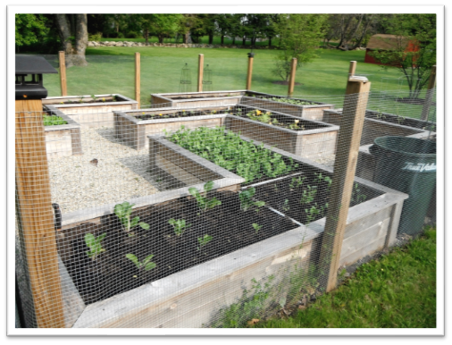 vegetable garden construction